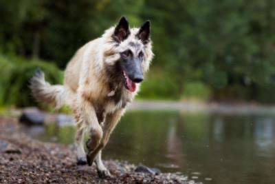 Geschützt: Hund Dakota